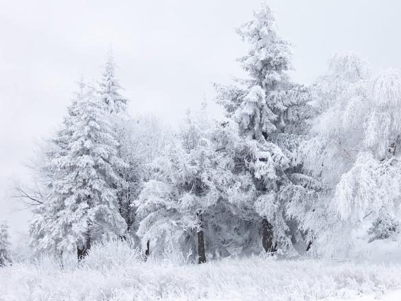 Depois de um longo e tenebroso inverno o musicologo está armando um retorno! Imagem: Psy Guy - http://commons.wikimedia.org/wiki/Winter#/media/File:Snow_Scene_at_Shipka_Pass_1.JPG